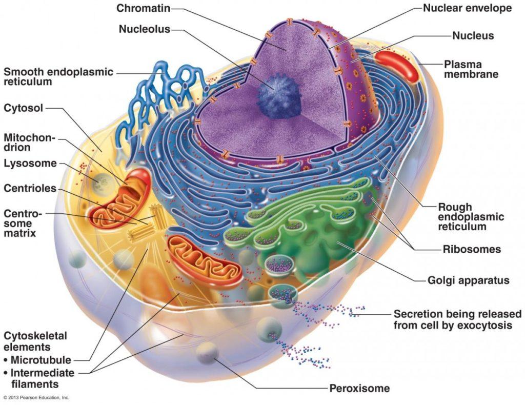 Живая клетка